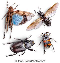 άγριος , έντομο , ζώο