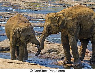 άγριος , κάνοντας μπάνιο , ποτάμι , οικογένεια , ελέφαντας