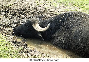 άγριος , animal., κυνηγετική εκδρομή εν αφρική