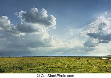 άδολος , πράσινο , transylvanian