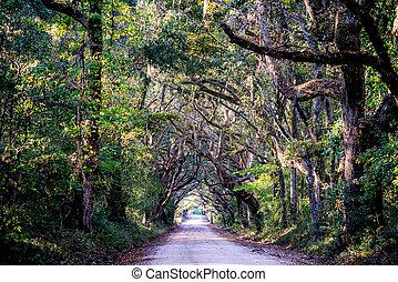 άκρη γηπέδου δρόμος , με , βελανιδιά , δέντρα , σε , φυτεία