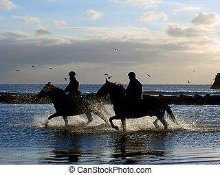 άλογα , εξαναγκάζω σε καλπασμό