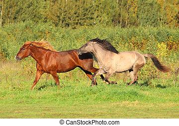 άλογα , τρέξιμο