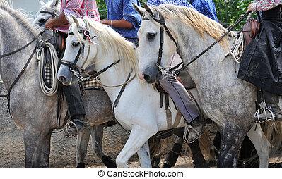 άλογα , camargue