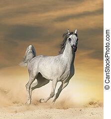 άλογο , αραβικός , εγκαταλείπω