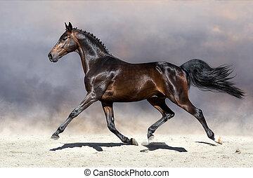 άλογο , εγκαταλείπω