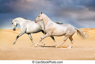 άλογο , εγκαταλείπω , akhal-teke