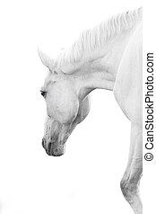 άλογο , μέσα , αβοήθητος απάντηση