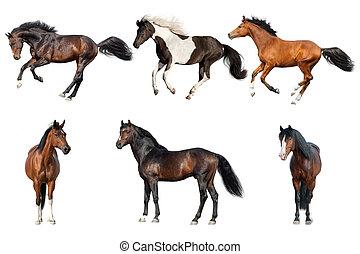 άλογο , συλλογή , απομονωμένος