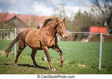 άλογο , τρέξιμο , γρήγορα