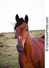 άλογο , τρέξιμο , ελεύθερος