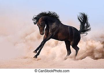 άλογο , τρέξιμο , καλπάζω