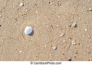 άμμοs , όστρακο , φόντο , κίτρινο