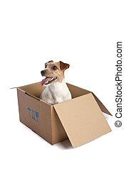 άνθρωπος russell εθνοφρουρός , μέσα , ένα , κουτί