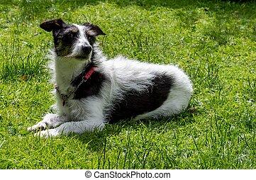 άνθρωπος russell , σταυρός , σκύλοs , ξαπλομένος , αναρουφώ με ρουθούνια , ο , αδιακανόνιστοσ.