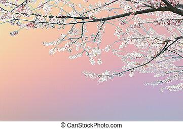 άνοιξη , δέντρο