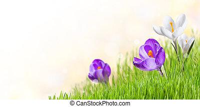 άνοιξη , φόντο , με , λουλούδια , και , γρασίδι