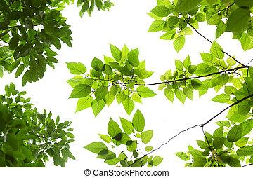 άνοιξη , φύλλα