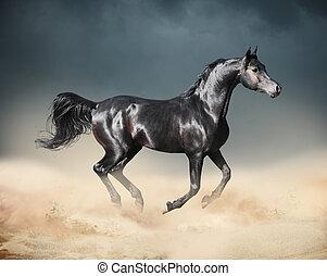 άραβας , άλογο , τρέξιμο , εγκαταλείπω