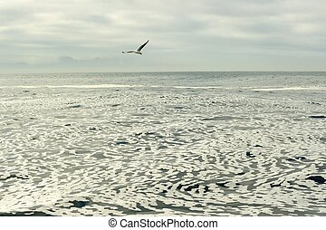 άσπρο , αφρός , επάνω , ένα , ακίνητο , του ωκεανού διαύγεια , surface.