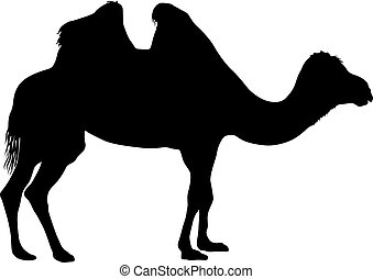 άσπρο , περίγραμμα , φόντο , καμήλα