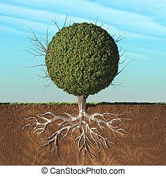 ένα , δέντρο , με , αγίνωτος φύλλο