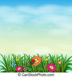ένα , κήπος , με , γεμάτος χρώμα , λουλούδια
