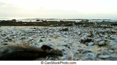 ένα , νεκρός , πουλί , μέσα , ο , παραλία , 4k
