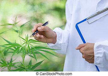 έρευνα , απάτη , έλεγχος , medicine., μαριχουάνα , έλαιο , ...