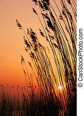 ήλιοs , απαντών σε καλαμώνας