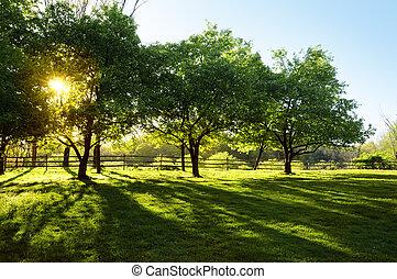 ήλιοs , διαμέσου , δέντρα , λάμποντας