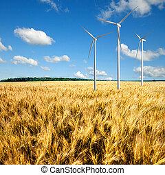 αέρας , γενέτης , στρόβιλος , επάνω , σιτάλευρο αγρός