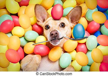 αίσιος easter , σκύλοs , με , αυγά