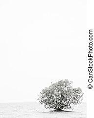 αβαθές μέρος , δέντρο , νερό , μόνος , αβικεννία , grows