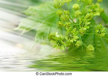 αγίνωτος φύλλο , αντανακλαστικός , αναμμένος άρθρο διαύγεια , αβαθή ύδατα ακριβής