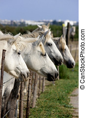 αγαθός άλογο