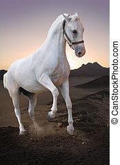 αγαθός άλογο , μέσα , ηλιοβασίλεμα