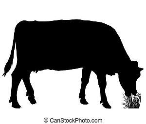 αγγίζω ελαφρά , αγελάδα
