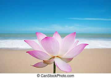 αγριοστάφυλο άνθος , παραλία