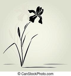 αγριόκρινο , μικροβιοφορέας , flower.