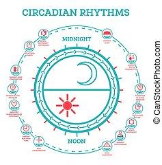 αγρυπνία , έκθεση , infographic, rhythm., cycle., κοιμάμαι , ορμόνες , ηλιακό φως , σκευωρία , production., διευθύνω , circadian , elements.