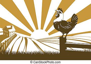 αγρόκτημα , και , κόκκοραs