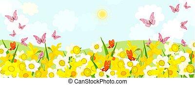 αγρός , ιπτάμενος , ασφόδελος , butterflies., αγροτικός , ακμάζων