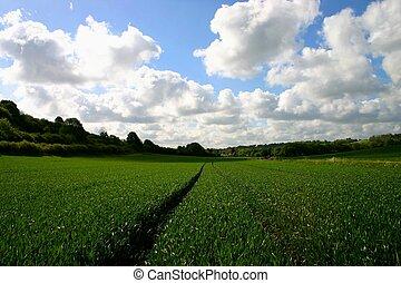 αγρότες , πεδίο