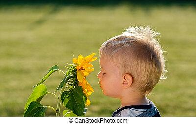 αγόρι , γριά , ηλιοτρόπιο , εις , ατενίζω , έτος , μωρό