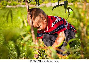 αγόρι , μικρός , κήπος