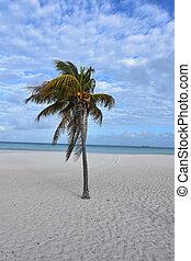αετός , ακτή , άμμοs , aruba , αγαθός ακρογιαλιά