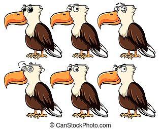 αετός , διαφορετικός , εκφράσεις , του προσώπου