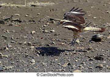 αετός , προσγείωση