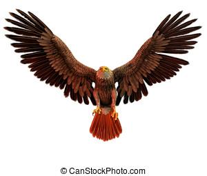 αετός , φαλακρός , πτήση